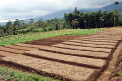 Región agrícola Imágenes de archivo libres de regalías