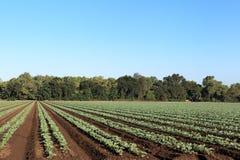 Región agrícola fértil Imágenes de archivo libres de regalías