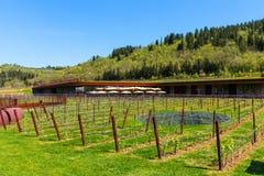 Región de Chianti, Italia - 20 de abril de 2018: El lagar de Chianti Classico del nel de Antinori foto de archivo libre de regalías