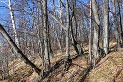 Región de Rusia, Cheliábinsk Bosque mezclado en las orillas del lago Uvildy en el día soleado de noviembre fotos de archivo
