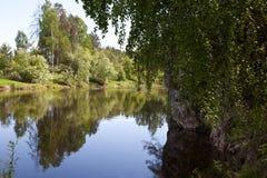 Región de Sverdlovsk Rusia Corrientes de los ciervos del parque natural Imagen de archivo
