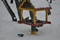 Región de Tula, ciudad de Suvorov palomas fotos de archivo libres de regalías