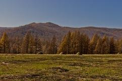 Región de Xing'an en el otoño, Inner Mongolia, China Foto de archivo libre de regalías
