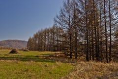 Región de Xing'an en el otoño, Inner Mongolia, China Imagen de archivo libre de regalías