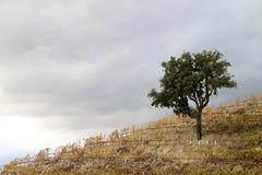 Región del vino de Douro del alto Fotos de archivo libres de regalías