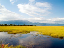 Región pantanosa Fotografía de archivo