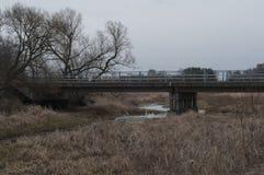 Región pantanosa en otoño Foto de archivo libre de regalías