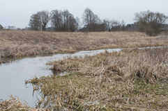 Región pantanosa en otoño Fotografía de archivo libre de regalías