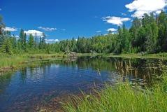 Región pantanosa en país del lago imagenes de archivo