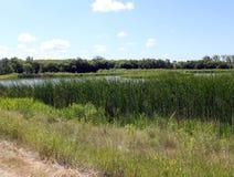 Región pantanosa y rastros, Brandon Riverbank Discovery Center imágenes de archivo libres de regalías