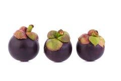 Regina dei frutti, frutta matura dei mangostani del mangostano su w Immagini Stock Libere da Diritti