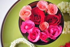 Regina di Rosa dei fiori Fotografia Stock