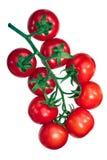 Regina pomidory na winogradzie, ścieżki Obraz Stock