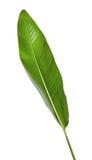 Reginae de Strelitzia, Heliconia, oiseau de feuillage de paradis d'isolement sur le fond blanc Image stock