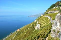 Região de Lavaux, Switzerland Imagens de Stock