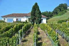Região de Lavaux, Switzerland Foto de Stock Royalty Free