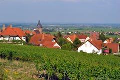Região do vinho de Pfalz - Burrweiler Fotos de Stock