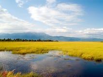 Região pantanosa Fotografia de Stock