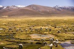 Região selvagem da cordilheira de Andes Foto de Stock
