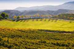 Região vinícola, Temecula, Califórnia do sul Imagem de Stock