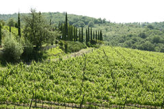 Region of Chianti in Tuscany (Italy). Is a hilly area covered with vineyards owned by local producers of famous Chianti wine stock image