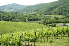Region of Chianti in Tuscany (Italy). Is a hilly area covered with vineyards owned by local producers of famous Chianti wine royalty free stock images