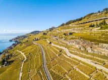Region Lavaux in golden autumn color, Switzerland stock photography