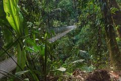 Hanging bridge across the jungle royalty free stock photo