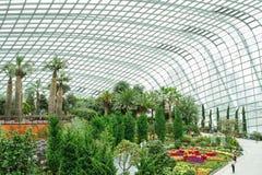 Regione asciutta di giardino botanico, Singapore 1 Immagini Stock Libere da Diritti