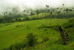 Regione del caffè della Colombia immagini stock libere da diritti