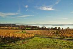 Regione del vino del lago di Costanza in autunno con la vigna variopinta dalla Baviera Germania Fotografia Stock Libera da Diritti