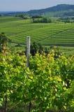 Regione del vino di Colli Orientali del Friuli, tramonto Immagine Stock