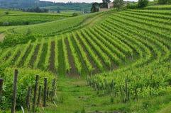 Regione del vino di Colli Orientali del Friuli, tramonto Fotografia Stock