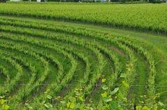 Regione del vino di Colli Orientali del Friuli, tramonto Immagine Stock Libera da Diritti