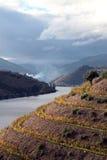 Regione del vino di Douro del negativo per la stampa di cartamoneta Fotografia Stock Libera da Diritti