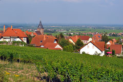 Regione del vino di Palatinato - Burrweiler Fotografie Stock