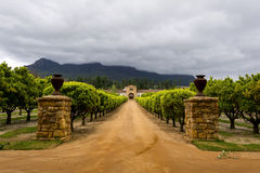 Regione del vino di Stellenbosch vicino a Cape Town, Sudafrica Immagini Stock
