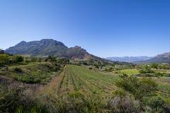 Regione del vino di Stellenbosch vicino a Cape Town, Sudafrica Immagine Stock Libera da Diritti