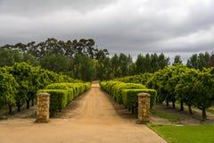 Regione del vino di Stellenbosch vicino a Cape Town, Sudafrica Immagine Stock