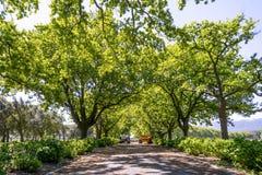 Regione del vino di Stellenbosch vicino a Cape Town, Sudafrica Fotografia Stock
