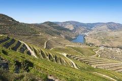 Regione di Douro Fotografia Stock Libera da Diritti