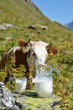 Regione di Jungfrau, Svizzera Fotografia Stock