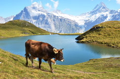Regione di Jungfrau, Svizzera Immagine Stock