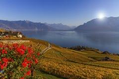 Regione di Lavaux, il Canton Vaud, Svizzera Fotografia Stock Libera da Diritti