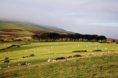 Regione montagnosa di Dartmoor Fotografia Stock Libera da Diritti