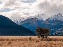 Regione selvaggia con le montagne e gli alberi Fotografia Stock