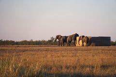 Regione selvaggia del parco nazionale di Kruger dell'elefante africano al Watertank fotografia stock