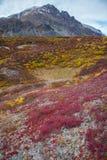 Tundra della regione selvaggia Immagini Stock