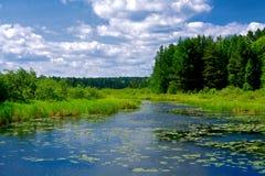 Regione selvaggia scenica di Wisconsin Immagine Stock