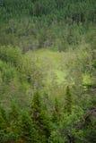 Regione selvaggia verde Immagine Stock